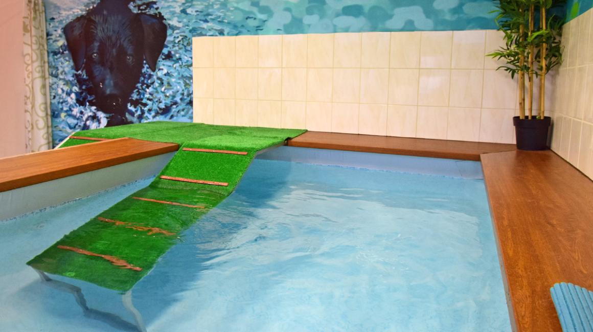 fitness a wellness - bazén pre psov