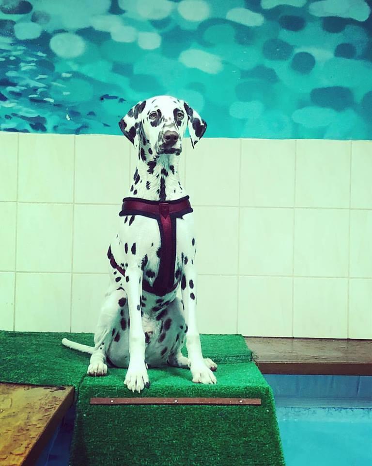 Bodkovaný pes je v bazéne! 🐶 Náš 8 mesačný chlapec Sebastian,  pláva ako ryba vo vode 👍