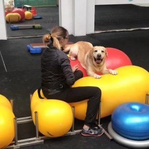 Tommy- fitness tréning :)